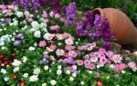 Многолетние красивые садовые цветы