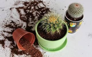 Все виды комнатных кактусов