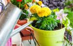 Как в домашних условиях смягчить воду для полива цветов