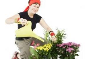 Сколько нужно отстаивать воду из под крана для полива цветов