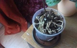 Уход за орхидеями в домашних условиях почему опадают листья