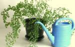 Почему при поливе цветов вода стекает сразу в поддон