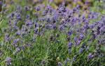 Лекарственные растения и цветы