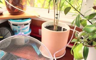 Автономный полив комнатных растений своими руками из пластиковых бутылок