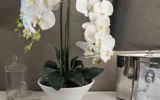 Как ухаживать за орхидеей в домашних условиях зимой после цветения