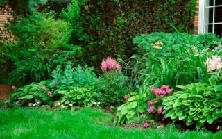 Тенелюбивые декоративные кустарники для дачи