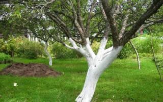 Как приготовить побелку для садовых деревьев