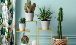 Названия и виды домашних кактусов