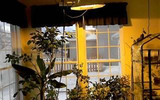 Уход за лимоном осенью в домашних условиях