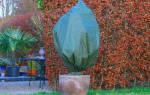 Декоративные кустарники уход осенью укрытие на зиму