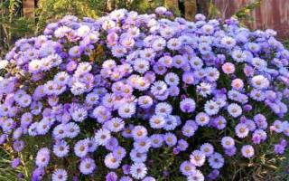 Особенности выращивания цветка