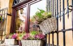 Как ухаживать за вереском в домашних условиях до весны
