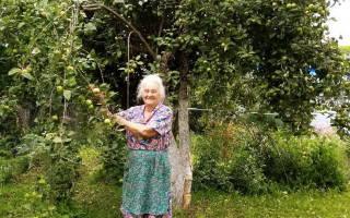 Как опрыскивать деревья осенью железным купоросом