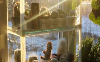 Уход за кактусами осенью и зимой