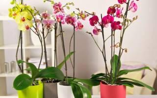 Орхидея как ухаживать за ней в домашних условиях